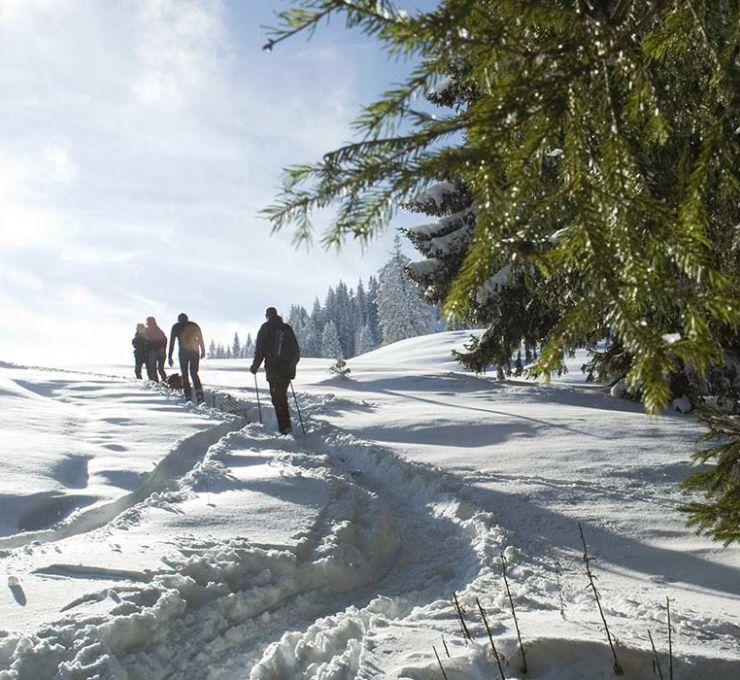 Ouverture des stations de ski dans les Alpes - Vignette